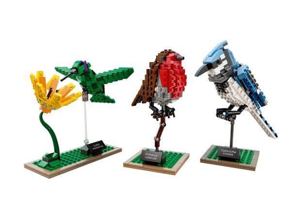 Huur de LEGO Birds